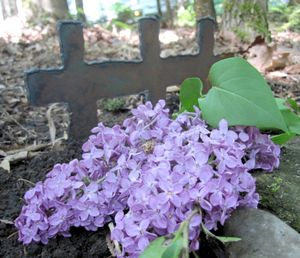 Phoebe grave1