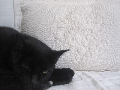 Obi and pillow