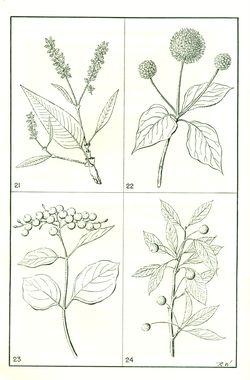 Nativ plants1
