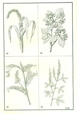 Nativ plants2