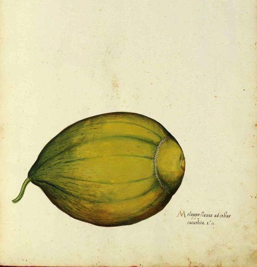 Botanical-Squash-Italian-16